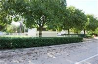 Plac u centru Bara, Crna Go p9483