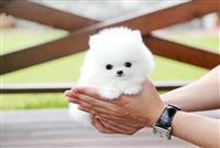 Lijepa štena i pet mjeseci stari ljubimci koji mog