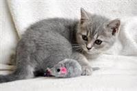 Slatka ljupka mačića za usvajanje