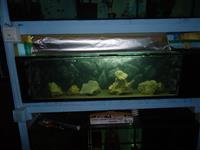 Akvarijumi i ribice