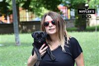 Crni Mops štenci