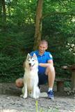 Sibirski haski štene