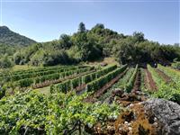 Domaće  crno vino i rakija - Riječka nahija