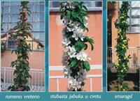 Sadnice voća i vinove loze